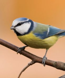 Bird and Wildlife
