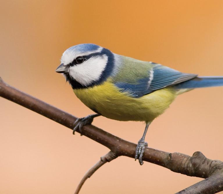 bird-and-wildlife